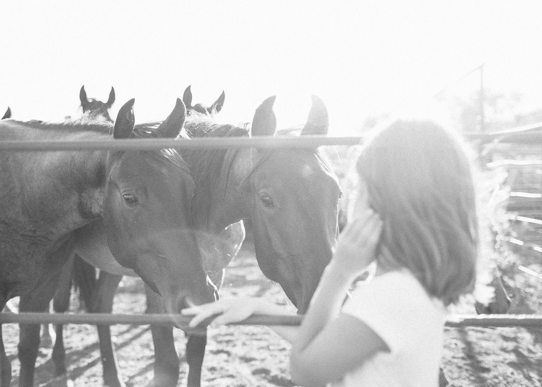 horses smelling girl