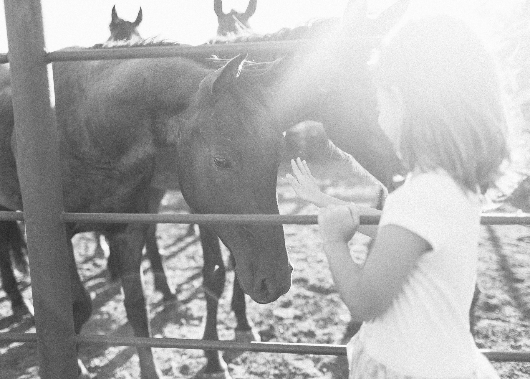 girl reaching out to pet horses