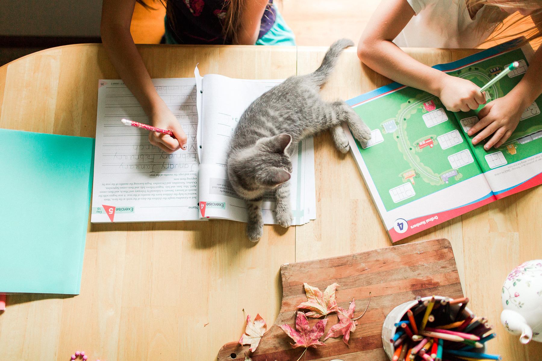 homeschooling girls doing workbooks